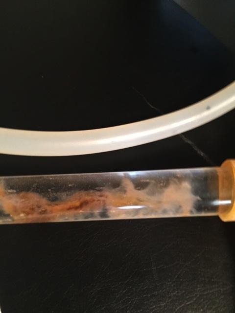 Parasites - Colonic Expert